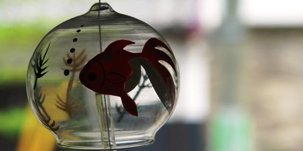 土浦繁盛記 金魚のふうりん